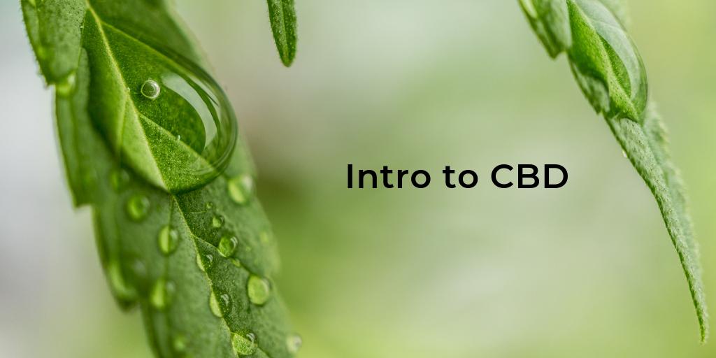 [Promo] Intro to CBD